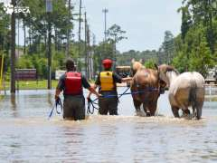 [image for Planet Spotlight Horse rescue Harvey flooding.jpg]