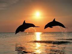 [image for Planet Spotlight Dolphins.jpg]