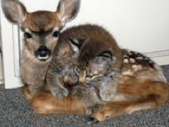 [image for Planet Spotlight Bambi and Bobcat.png]