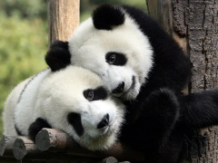 [image for Planet Spotlight Panda-Hug.jpg]