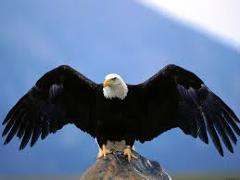 [image for Planet Spotlight Bald Eagle.jpg]